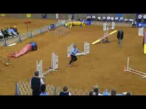 AKC National Agility Championship Finals Corgi-Pembroke