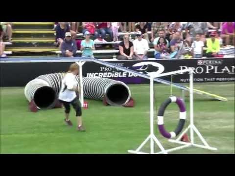 Large Dog Agility 1st Place – Incredible Dog Challenge 2015 Huntington Beach, CA